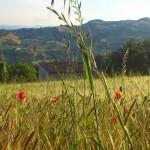 La casa dal campo di grano