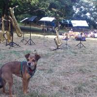 Mimì e i saxofoni