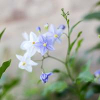 Dettaglio di fiore